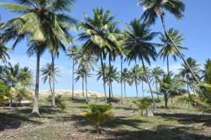 Praia da Siribinha