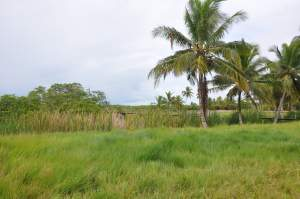 Praia do Sabacuí  - Praias-360