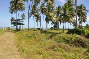 Praia do Condomínio Barra Grande Marina  - Praias-360
