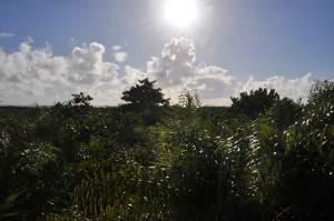 Praia de Pontal do Sul  - Praias-360
