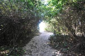 Praia do Prumirim  - Praias-360