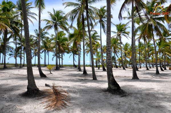 Praia Da Ilha De Comandatuba